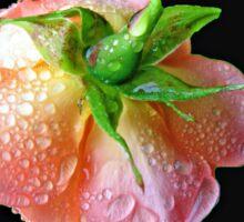Bejewelled Orange Wildfire Rose Collage Sticker