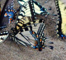 Butterfly Congregation Sticker