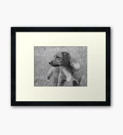 Feral Fine Framed Print