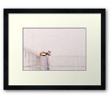 Ginger Cat, White Wall Framed Print