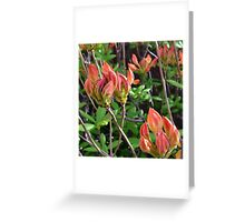 Floral Aesthetic 4 Greeting Card