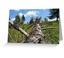 a tree trunk dry, in carpathians mounains, transilvania romania Greeting Card