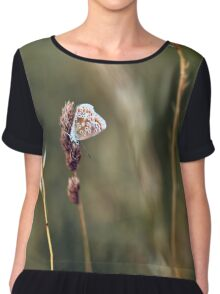 Brown Argus butterfly Chiffon Top