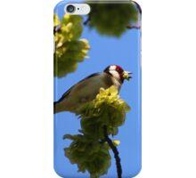 Goldfinch feeding on blossom iPhone Case/Skin