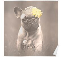 French Bulldog Puppy in Hat Poster
