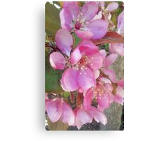 Beauty in Pink Canvas Print