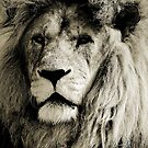 LE LION by Leny .