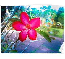 Colorful Flower Poster