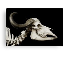 Black and White Cattle Skull Canvas Print