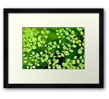 Soothing Greenery  Framed Print
