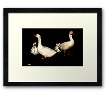 The little Feather.......... Framed Print
