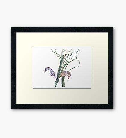 Seahorses in Seagrass Framed Print