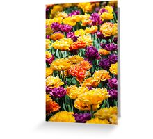 Radiant Tulips Greeting Card