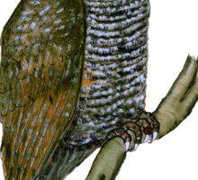 spotted wood owl, tony fernandes Sticker