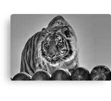 Sumatran Tiger (black and white version) Canvas Print