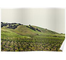 Napa Valley in the Spring Poster