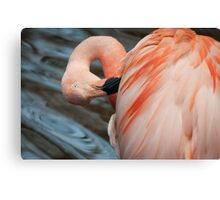 Under the feather Canvas Print