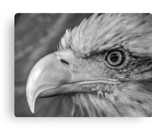 Bald Eagle in black and white Canvas Print