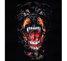 Givenchy dog rottweiler Photographic Print