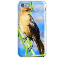 Boat Tailed Grackle Female iPhone Case/Skin