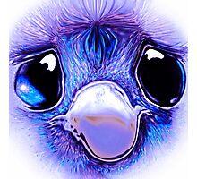 Sad eyed baby emu Photographic Print