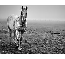 Appaloosa in the fog (2) Photographic Print