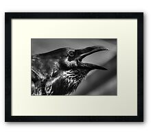 Raven in black and white Framed Print