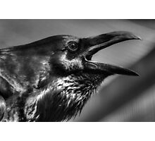 Raven in black and white Photographic Print