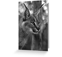Caracal (black and white version) Greeting Card
