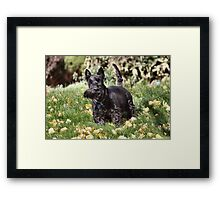 Ach! It's so windy me wiskers are crooked! Framed Print