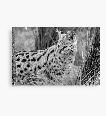 Serval in black and white Canvas Print