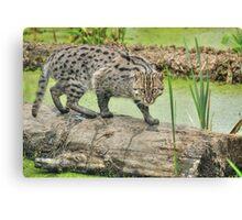 Fishing Cat (2) Canvas Print