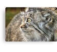 Pallas Cat (1) Canvas Print