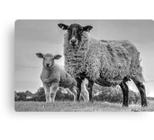 Ewe and Lamb in black and white Canvas Print