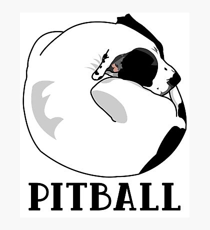 A Tiny Big Dog - Love for Pitballs.  Photographic Print