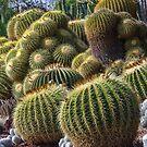 Cactus Garden 2 - The Huntington by David Galson