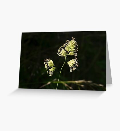 Full Bloom Greeting Card