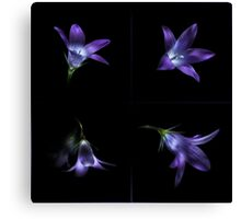 Four Bluebell Flowers - Light Painting Canvas Print