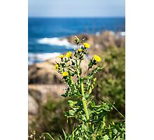 Flower growing next to the cliffs Photographic Print