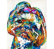 Colorful Shih Tzu Dog Art by Sharon Cummings Photographic Print