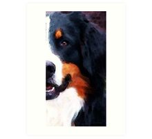 Bernese Mountain Dog - Half Face Art Print
