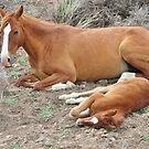 Newborn Foal by marilyn diaz