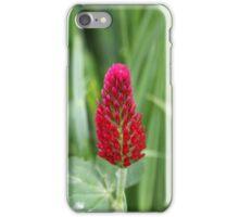 Flowers of the crimson clover, Trifolium incarnatum iPhone Case/Skin