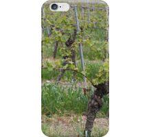 Grape vine in a vineyard iPhone Case/Skin