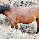 Magical Mustang by marilyn diaz