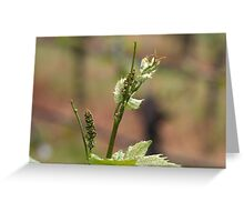 Fresh sprouts of grape vine Greeting Card