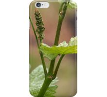 Fresh sprouts of grape vine in a vineyard in spring. iPhone Case/Skin
