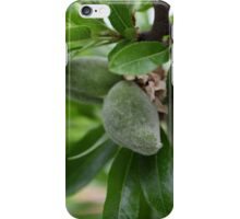Green fruit of an almond tree iPhone Case/Skin