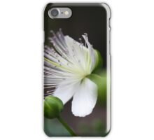 Flower of the caper bush, Capparis spinos. iPhone Case/Skin