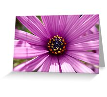 Vibrant daisy by Mediterranean Greeting Card